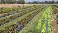 ¿La agricultura ecológica puede alimentar al mundo?